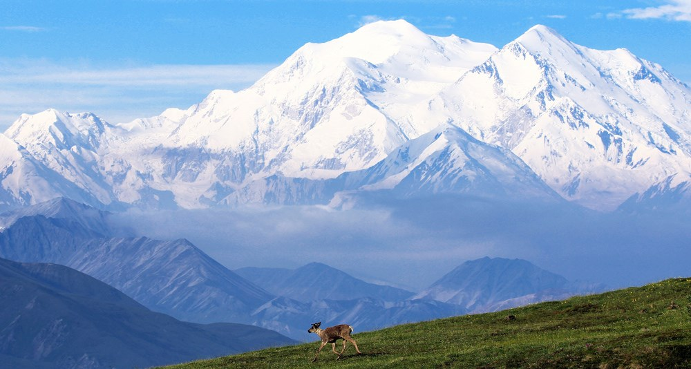 Denali, Alaska (In Case You Decide to Visit)